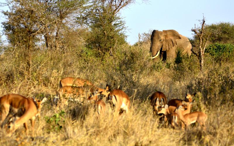 Gemeindeausfahrt Serengeti-Park